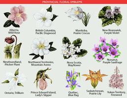 Provincial Floral Emblems The Canadian Encyclopedia